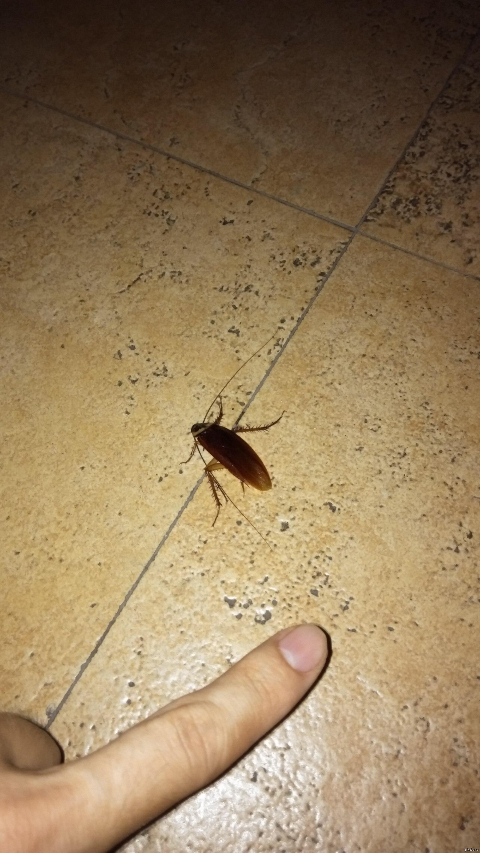 К чему появляются тараканы в квартире: народные приметы