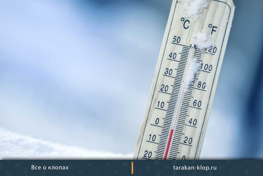Термообработка против клопов, при какой температуре умирают клопы?