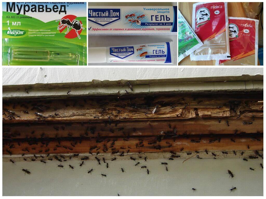 Как избавиться от муравьёв в бане народными и химическими средствами