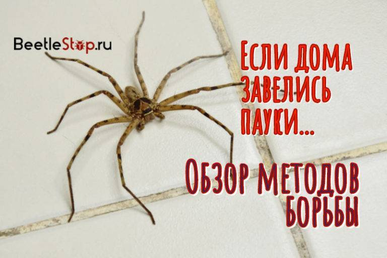 Как вывести пауков из дома? простые и эффективные способы избавиться от пауков