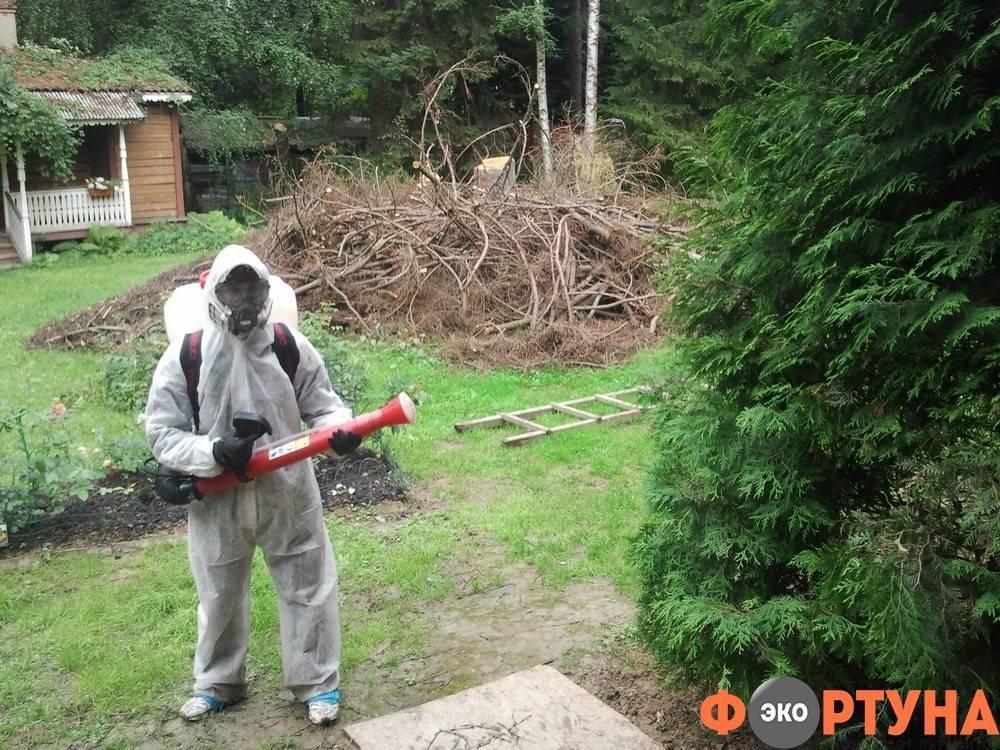 Жук точильщик: как избавиться в доме и квартире, виды жуков