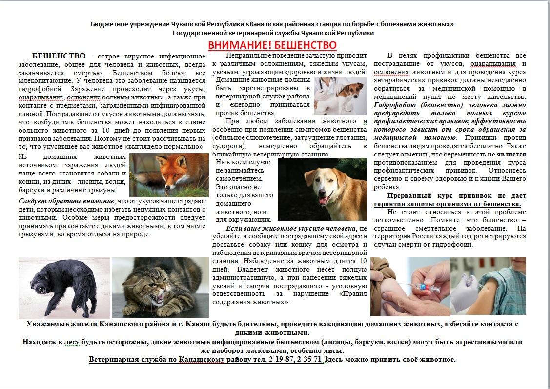 Симптомы и лечение энцефалита у собак (энцефалитный клещ)