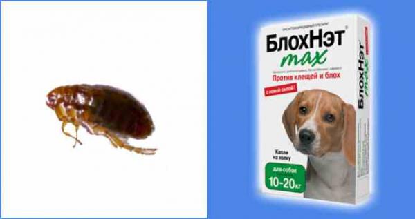 Собачьи блохи: чем опасны, способы выведения насекомых