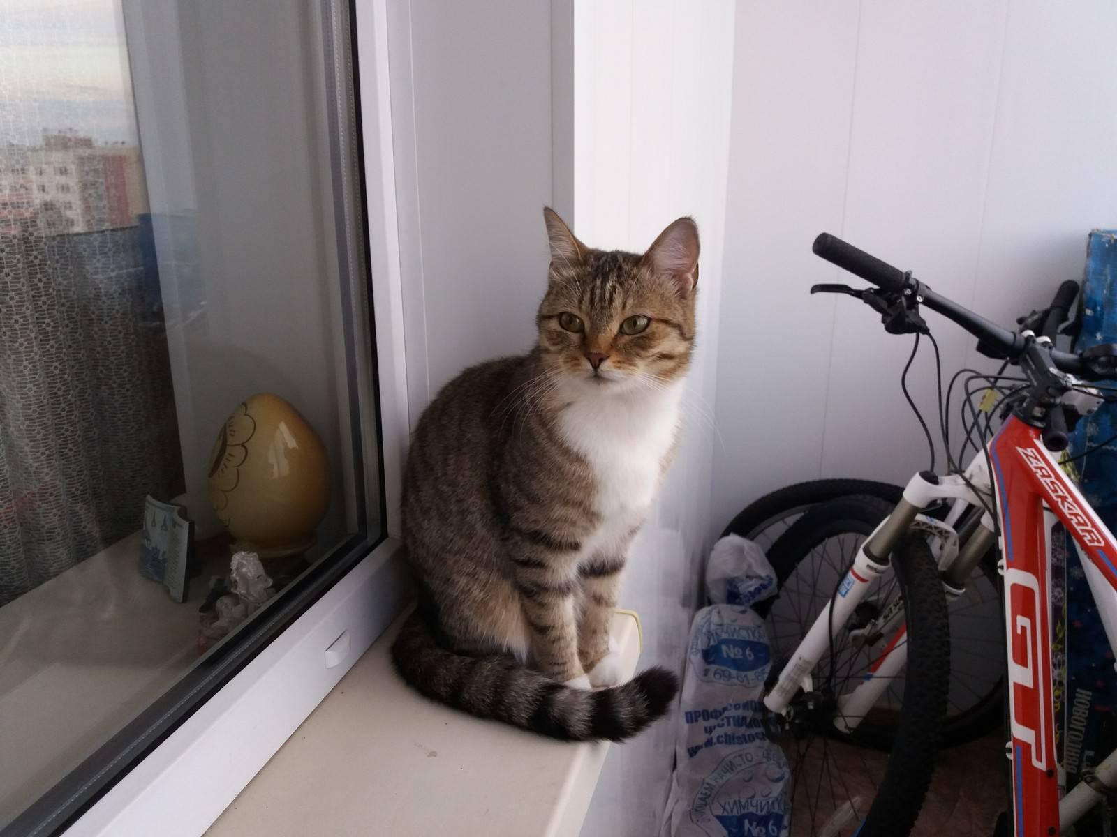 Почему кот ест целлофан и что в таком случае делать