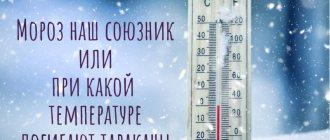 При какой температуре умирают тараканы: боятся ли они холода, можно ли бороться с ними с помощью мороза