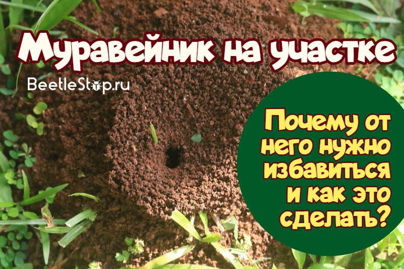 Как избавиться от муравьев на дачном участке: народными средствами, рецепты, видео