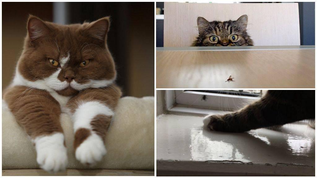 Кот проглотил муху: опасность и первая помощь