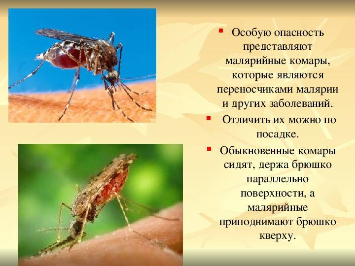 Малярия — не миф: симптомы гриппа могут быть признаками малярии