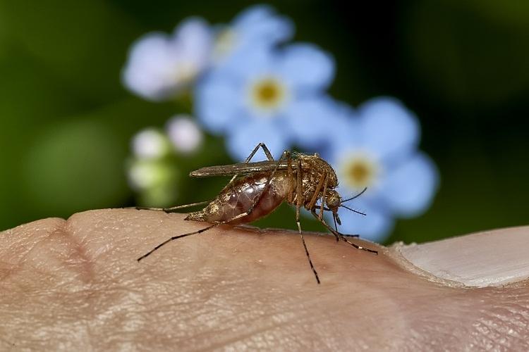 Питание комаров: что едят самки, самцы и личинки