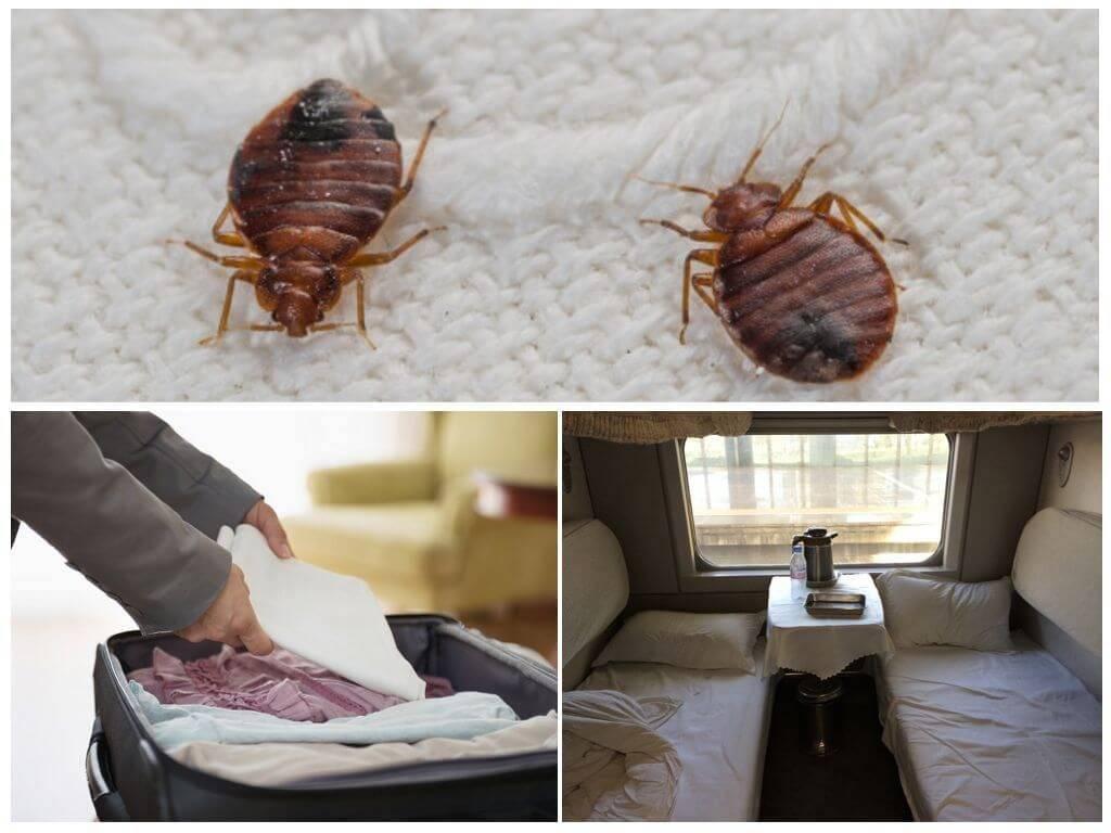 ❶ мебельные клопы ━ как избавиться от них самостоятельно в домашних условиях и откуда они берутся