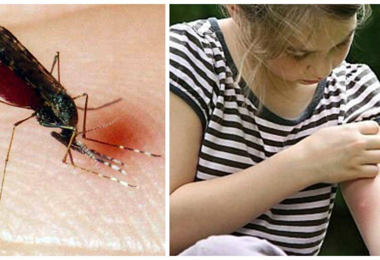 Как и зачем комары пьют кровь