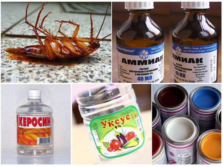 Нашатырный спирт (нашатырь) от тараканов: рецепт, как избавиться, помогает ли?