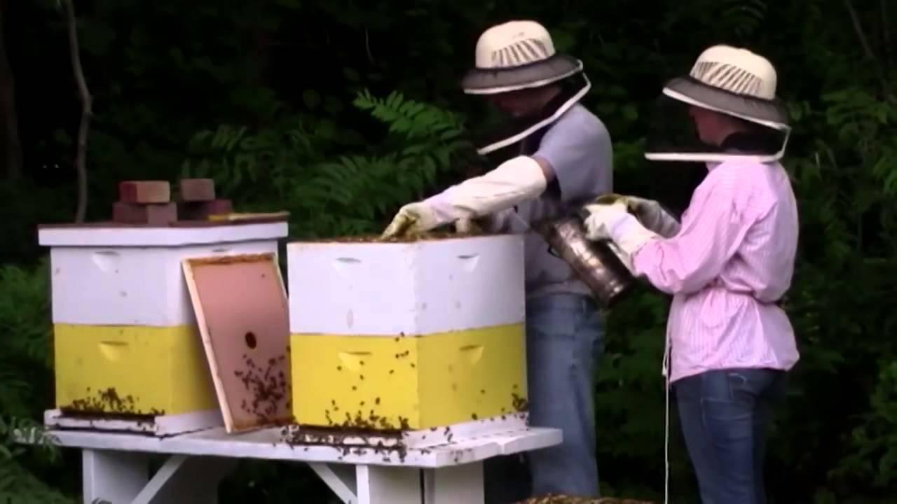 21 способ избавления от соседских пчел