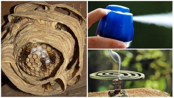 6 способов уничтожения гнезда шершней