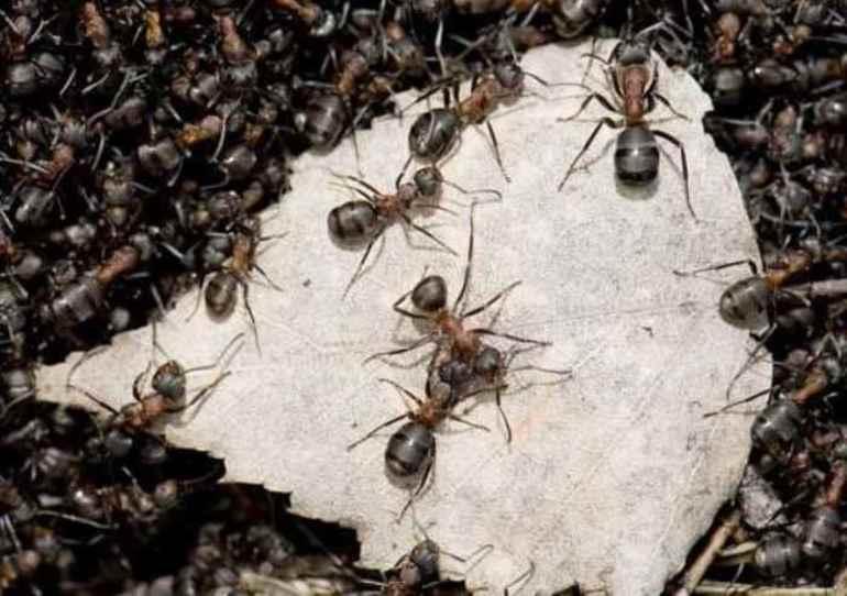 """Толкование сна по сонникам """"к чему снятся муравьи?"""": обзор различных сборников снов"""