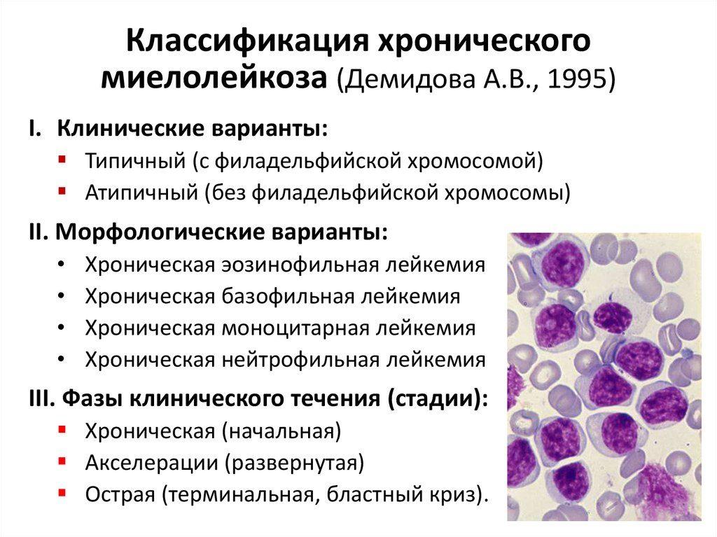Клещевой эрлихиоз у человека: симптомы и описание, лечение