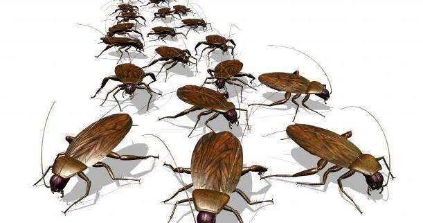 Убивать рыжих тараканов