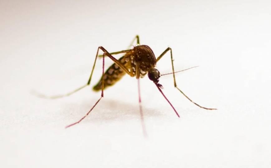 Какую группу крови любят комары, а какую нет