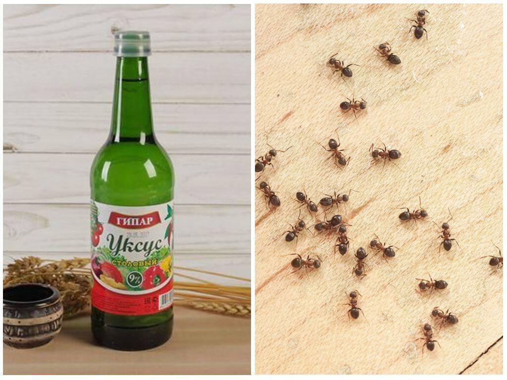 Как избавиться от муравьев в доме: способы и советы