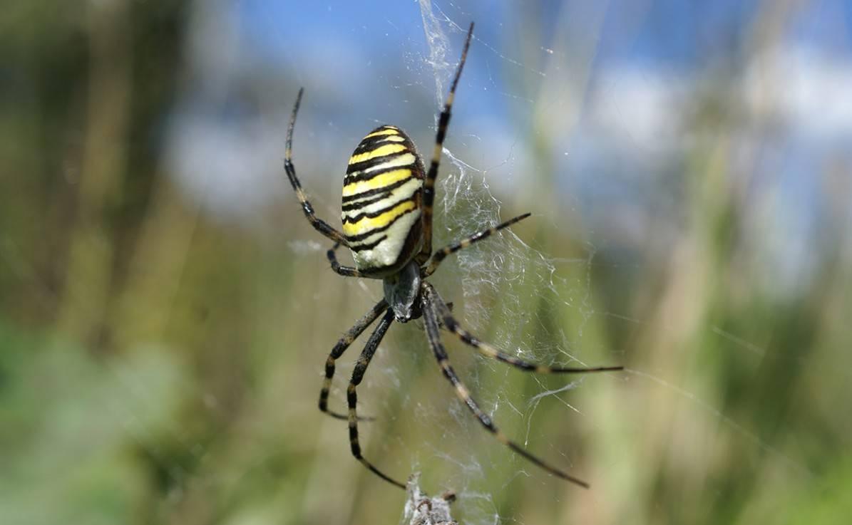 Образ жизни ядовитых опасных и неопасных насекомых скорпионов