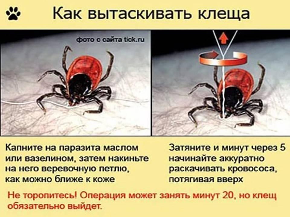Как убить клеща: можно ли убить чесоточного или пылевого паразита, какие эффективные препараты или средства, убивающие их