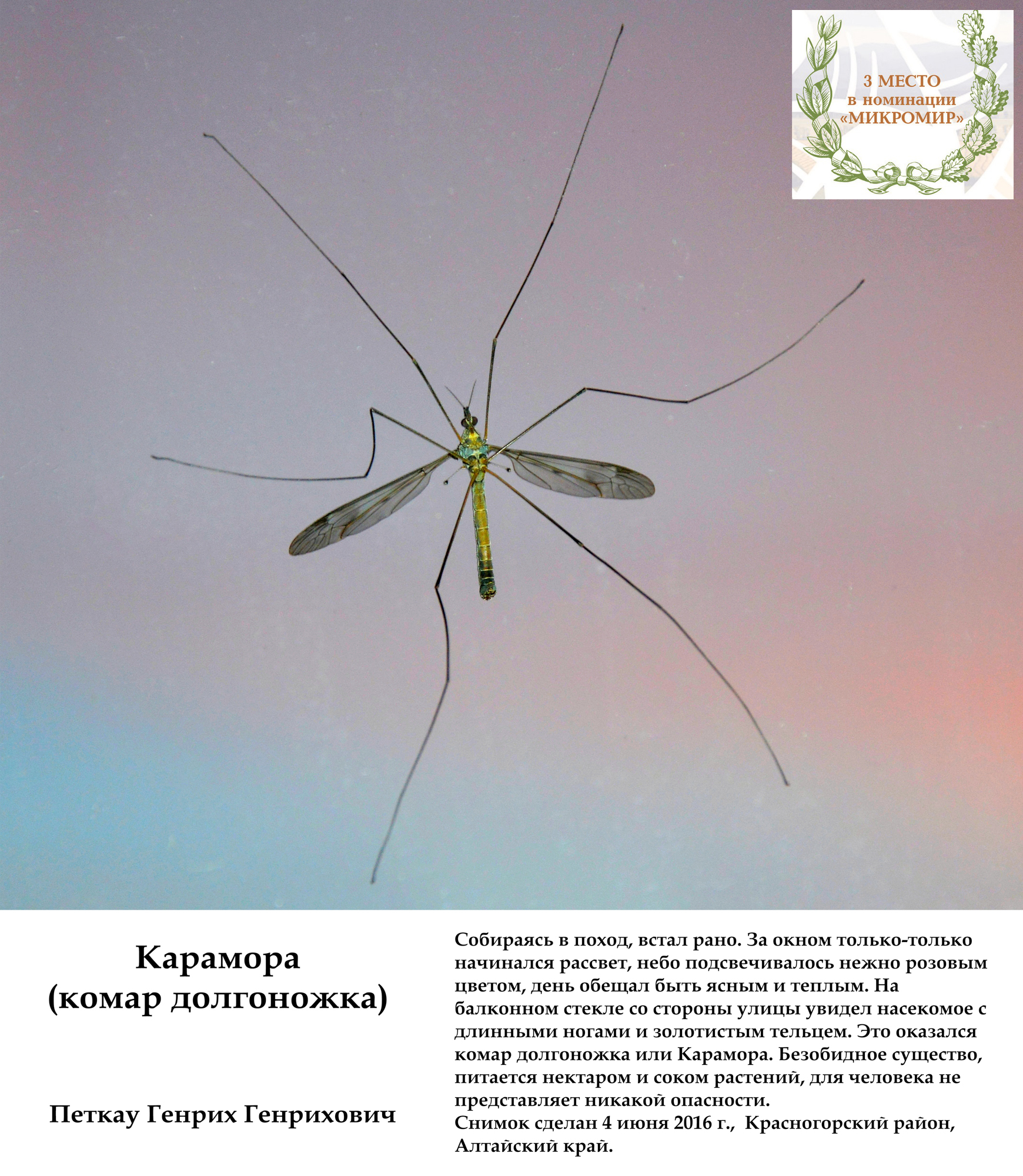 Личинка комара: описание и виды, как называется и чем питается