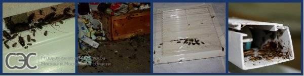Как вывести тараканов из частного дома или квартиры с помощью народных средств?