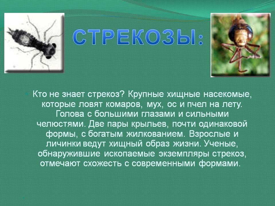 Комар - 115 фото удивительных и опасных насекомых. места обитания и образ жизни