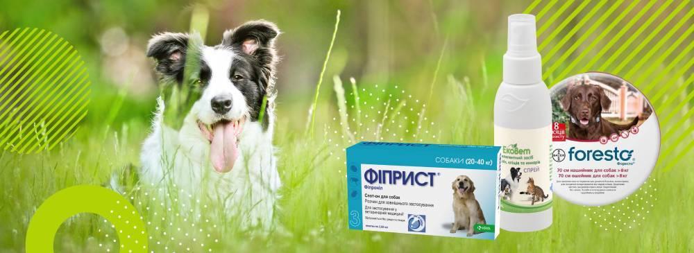 Обзор таблеток для собак от клещей и блох