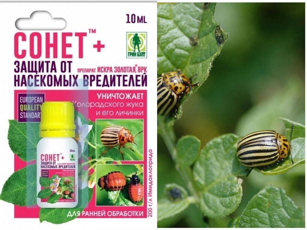 Командор - средство от колорадского жука: инструкция по применению, дозировка, принцип действия, отзывы