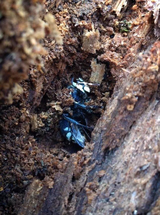 Могут ли осы напасть ночью. где зимуют осы куда же они исчезают осенью. видео: как ёжики зимуют