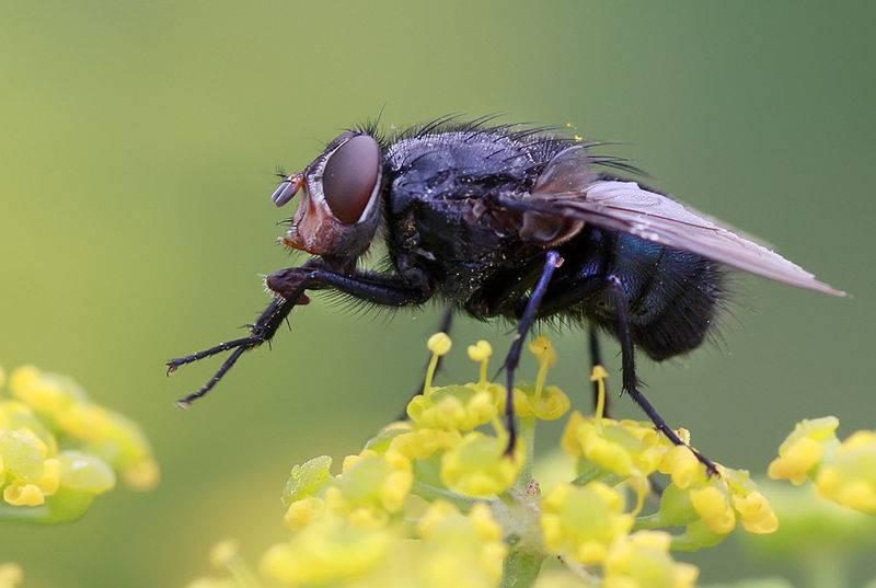 Почему мухи трут лапы друг о друга? причины, фото и видео  - «как и почему»