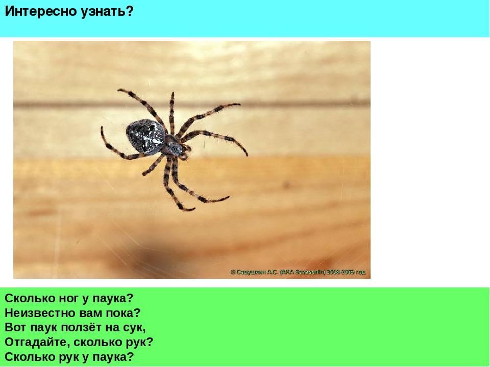 Сколько лап у паука и еще несколько вопросов «на засыпку»