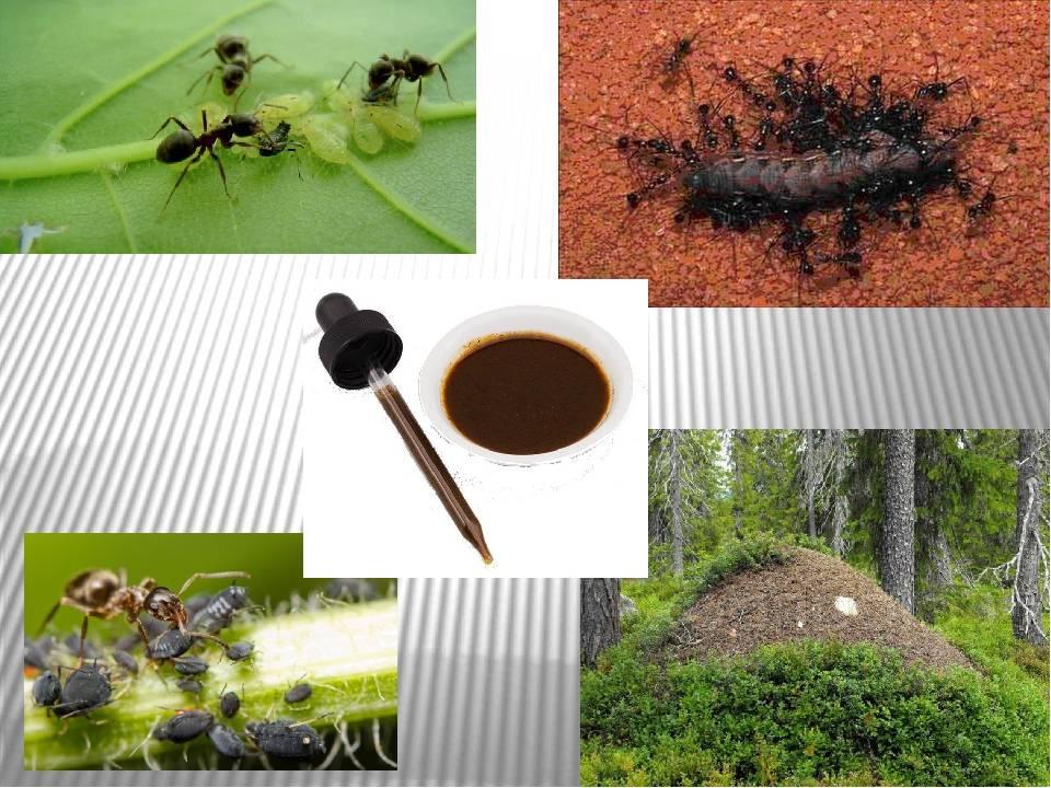10 невероятных фактов о муравьях :: инфониак