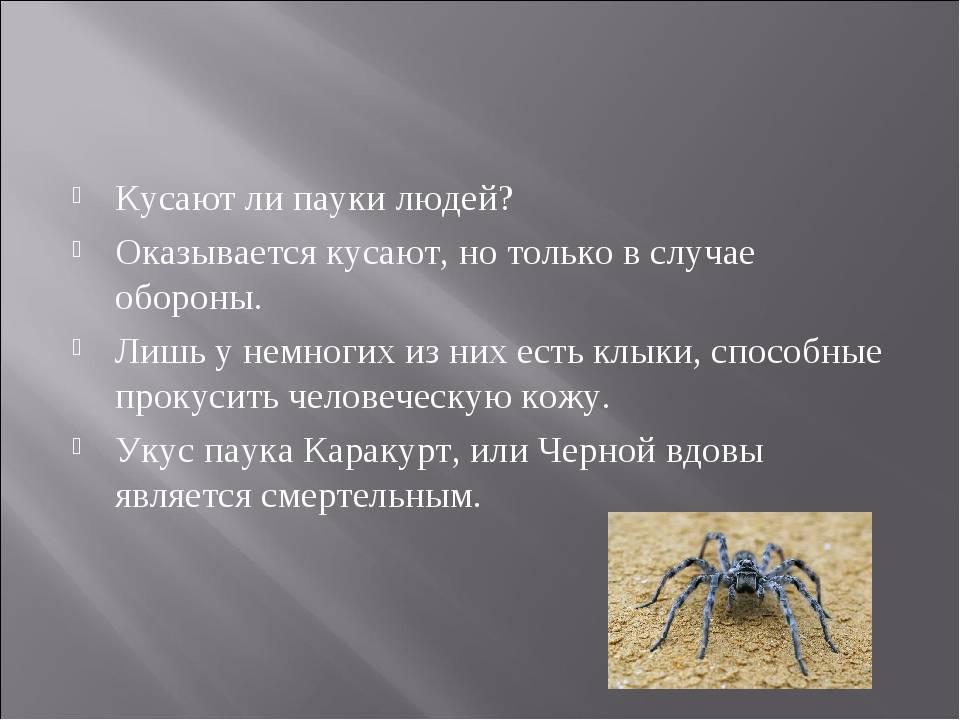 Значение паукообразных в природе и жизни человека – основное влияние