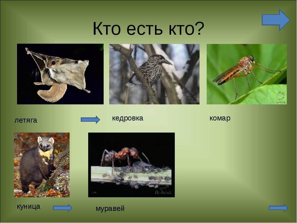 Кто питается личинками комаров