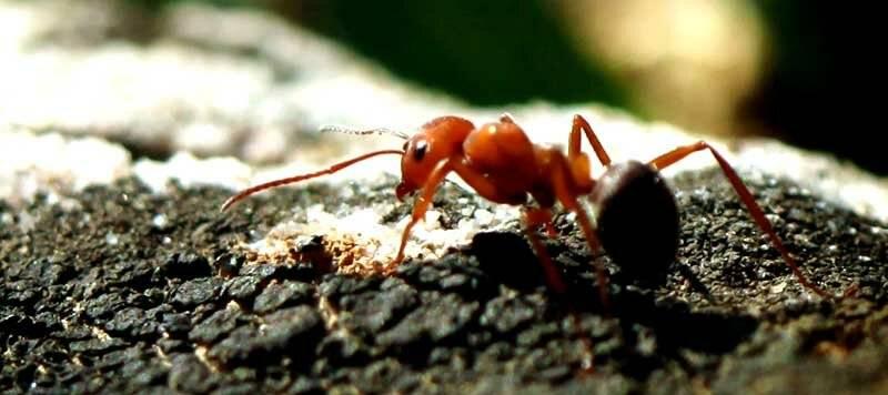 Спят ли муравьи: как они это делают, есть ли муравьи которые никогда не спят