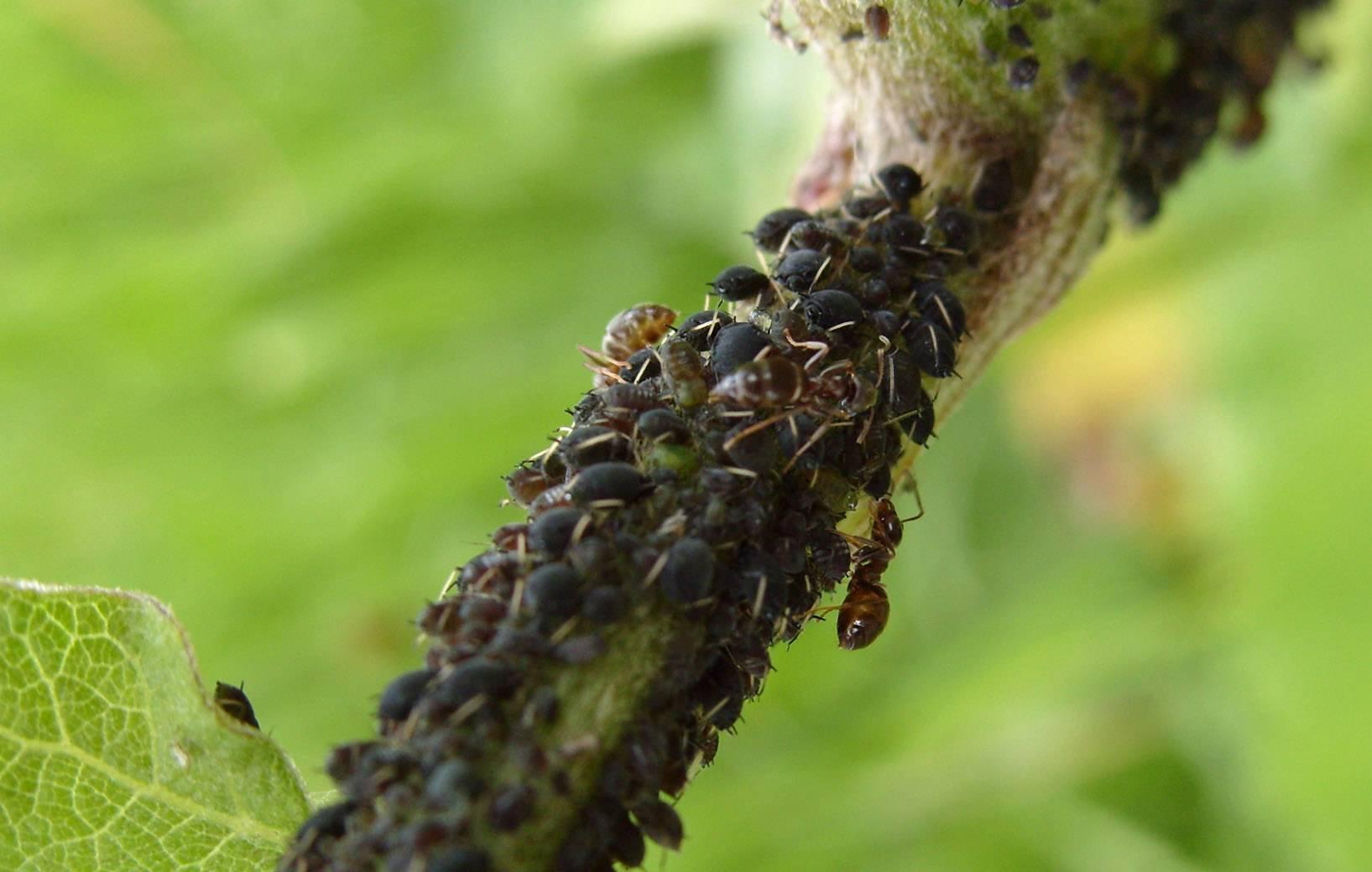 Борьба с гусеницами в саду и огороде – чем обрабатывать растения - огород, сад, балкон - медиаплатформа миртесен