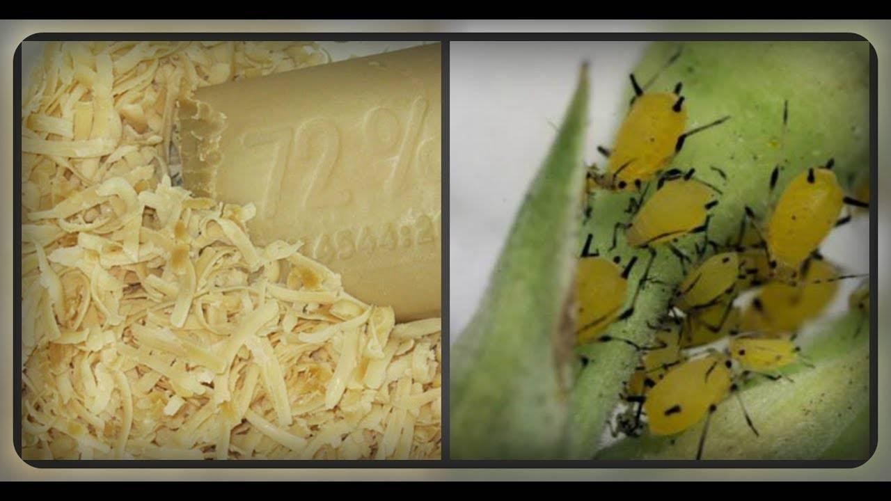 Мыльный раствор для цветов, растений и деревьев от тли и других вредителей: как приготовить