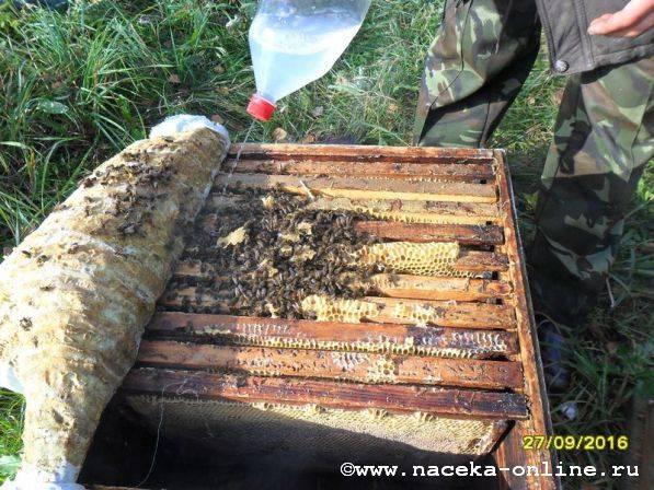 Препарат бипин для обработки пчел, инструкция по применению