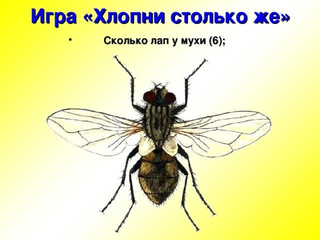 Откуда появляются мухи в доме зимой и какие приметы с этим связаны