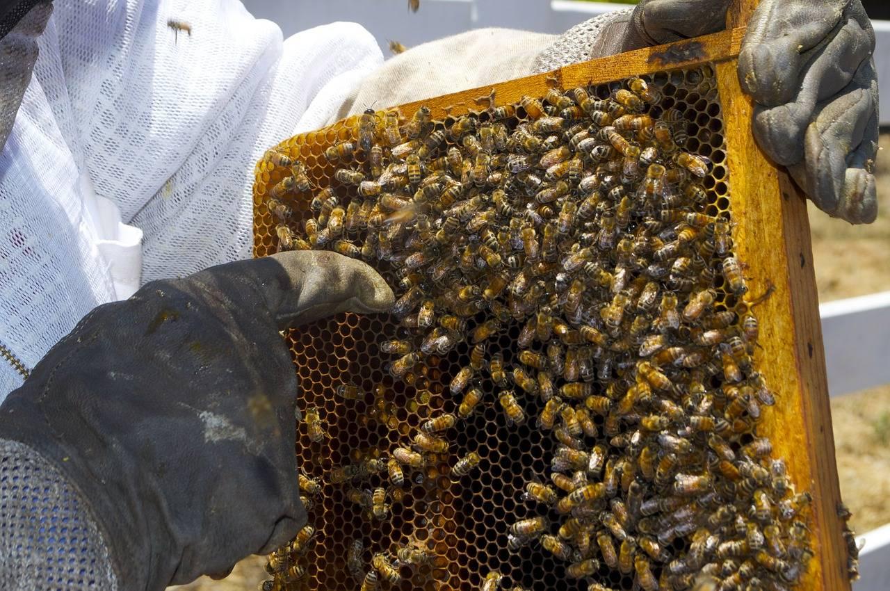 Способы борьбы с опасными вредителями пчел