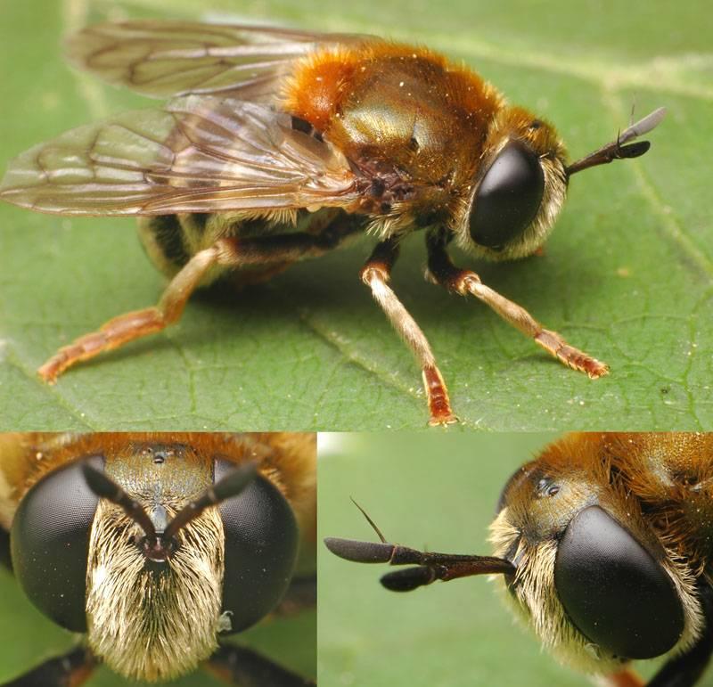Жук-усач, характеристика и образ жизни насекомого с длинными усами