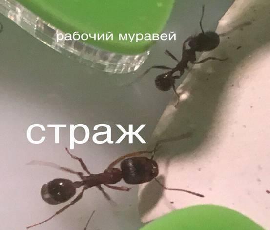 Правда ли что муравьи никогда не спят, как они восстанавливают энергию?