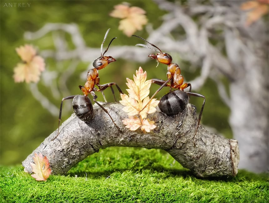 Как живут муравьи в муравейнике