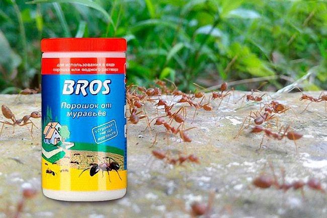 Средство от муравьев: самые эффективные домашние методы и химические составы