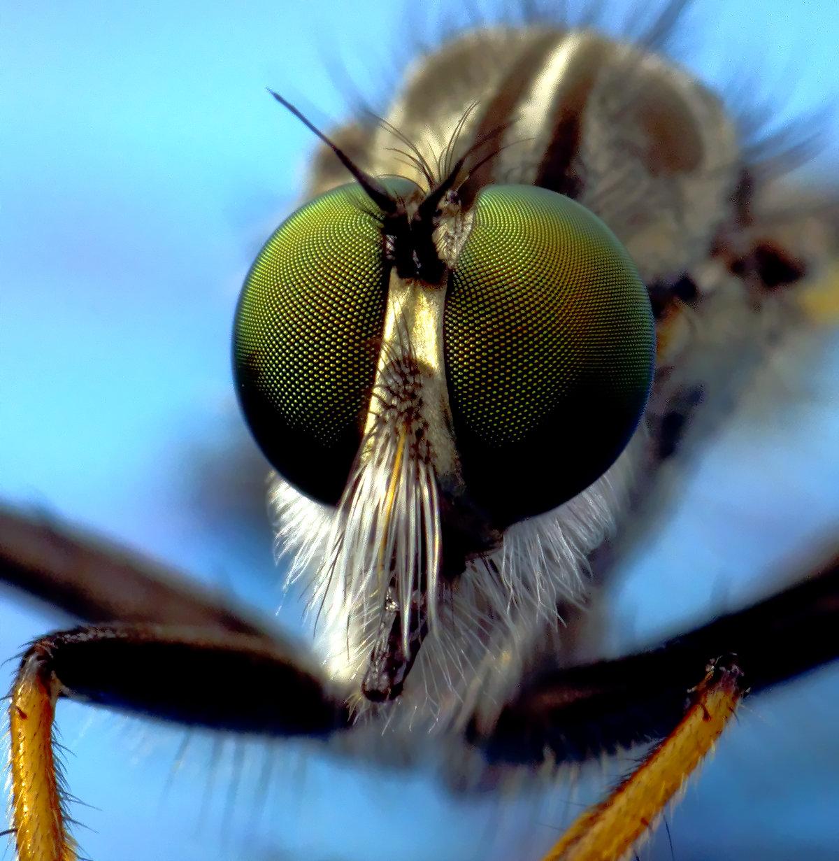 Сколько кадров в секунду видит муха, сколько у неё глаз