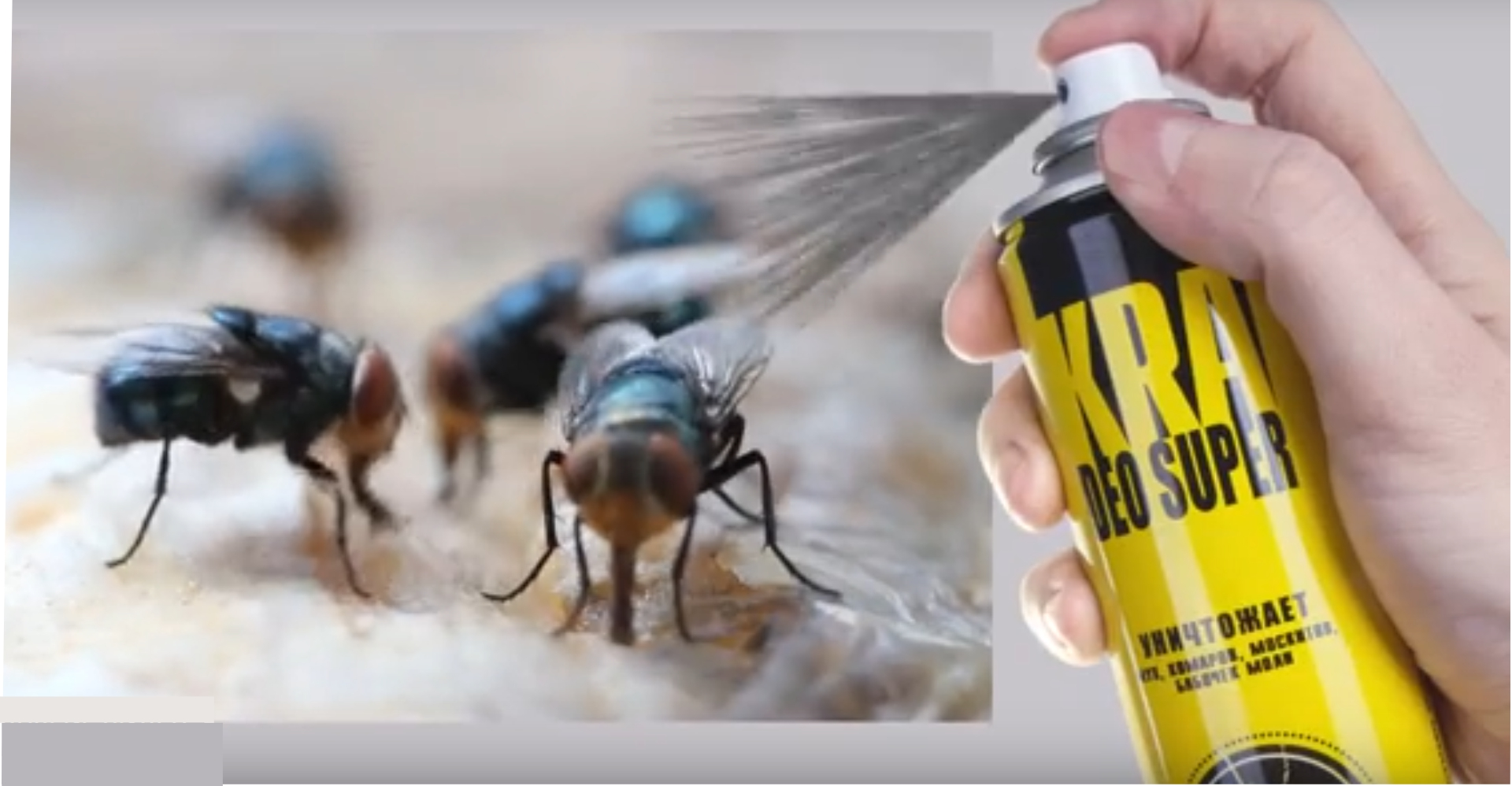 Как избавиться от ос на даче: эффективные методы борьбы с насекомыми