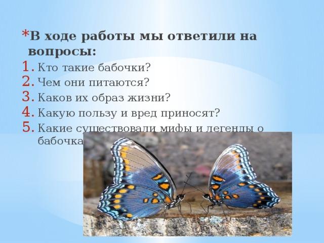 Описание бабочки: стадии развития, внешний вид и питание