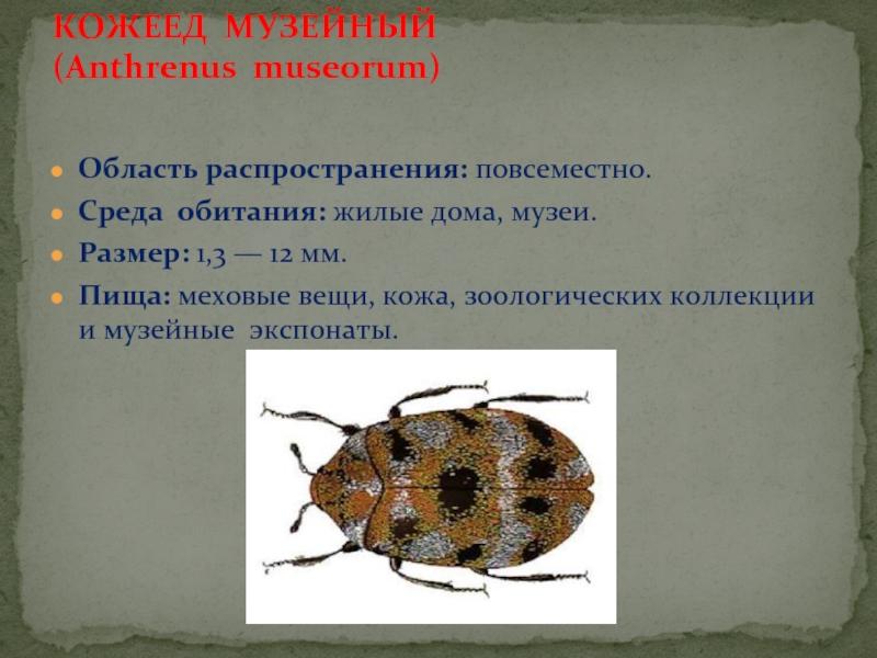 Кожееды в доме: что нужно знать о жуках